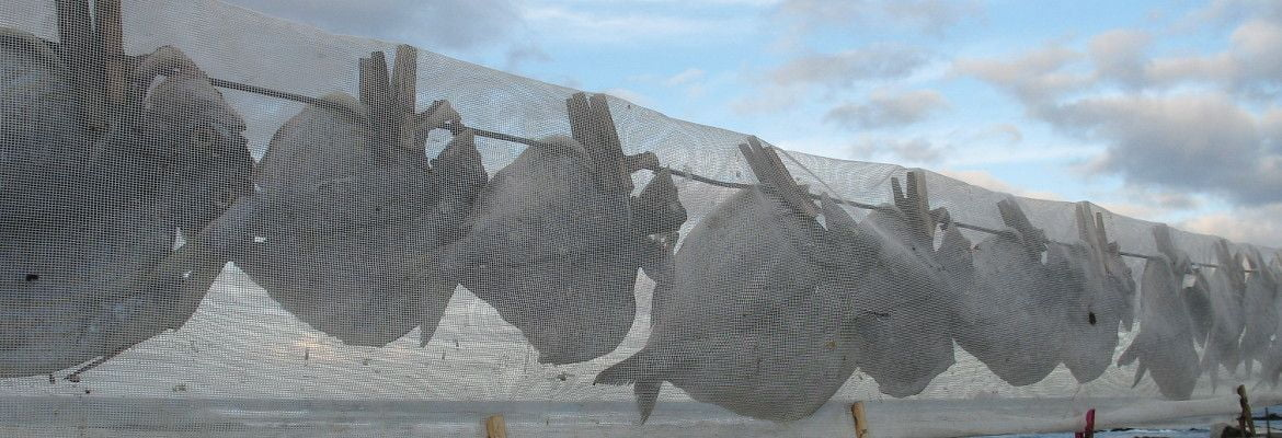 Fish Drying at Orzola