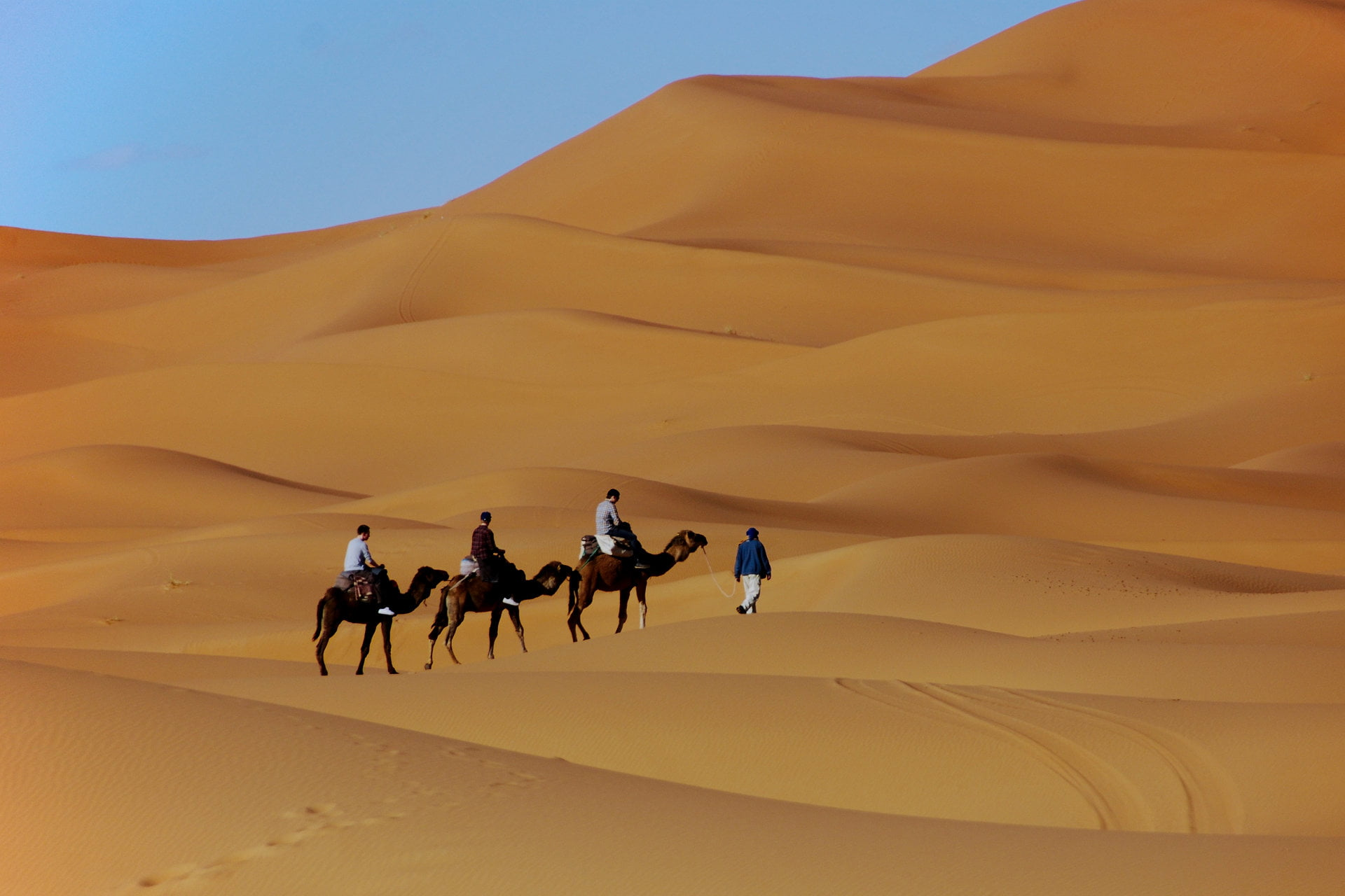 Camels and Dunes in Morocco