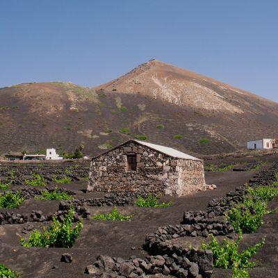 La Geria, Lanzarote's Wine-growing Region