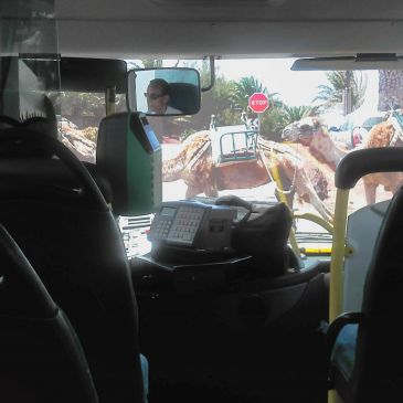 Lanzarote Bus Routes and Timetables