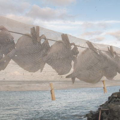 Fish Drying in the open air at Orzola, Lanzarote